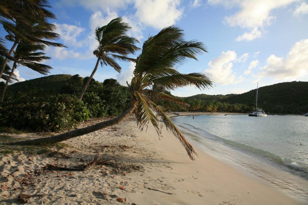 Rejs po Karaibach - palmy